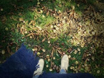 autumnwdp